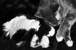 Yin Yang Cats by SublimeBudd