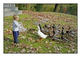 Feeding ducks.img464, with story by harrietsfriend
