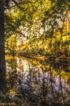 Magic of Paradise II by Tigles1Artistry