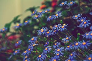 Flowers I by gendosplace