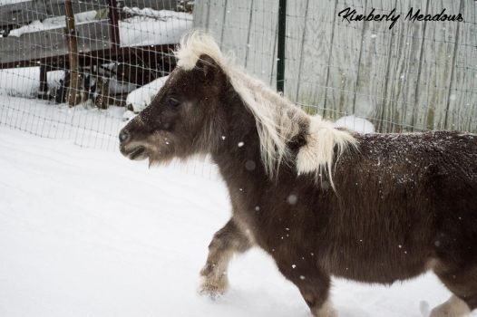 Trotting Through The Snow by EquideDesigns