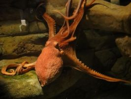 Things from DC: Giant Octopus by Killbot-Beauty