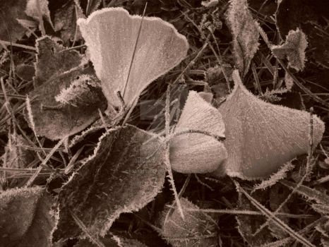 ginko leaves by forestchild666