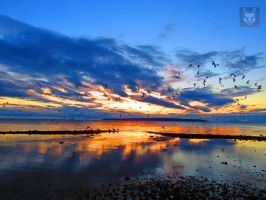 Reflected Sunset Flock by wolfwings1
