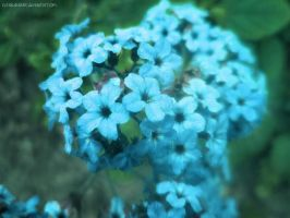 Forget Me Not 2 by mathyrawr