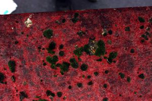 Blood Red Wall Deep Green Moss by aegiandyad