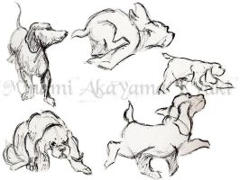Animal Studies . Dogs 1 by Sorren-Chan