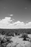 Into the mexican desert by D3R-Spitzel