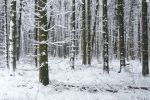 Winterwoods... by Valdkynd