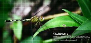 Dragonfly by alienbiru