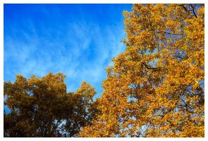 autumn by PvP