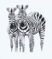Two Zebras by PunkyMeadows