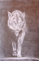 wolf by Marywhois