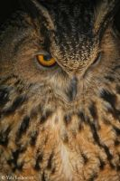 eagle owl by Yair-Leibovich