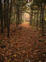 Leaf Strewn Path by Pittfiend