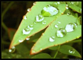 Drenched Duo by Sunira