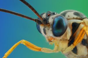 Yellow Parasitic Wasp by AlHabshi