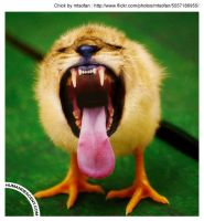 lion + chick equals Lick by HumanDescent