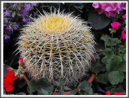 A cactus by Iuliaq