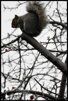 Squirrel by Placebow