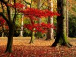 Autumn Glade by parallel-pam
