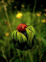 Lost Ladybird by erlebnis by LadybugsClub