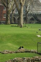 RSNS Ravens on the Green by rensstocknstuff