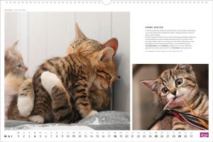 Hoschie in Whiskas calendar 2014 by hoschie