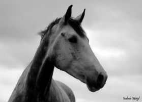 black and white #12 by imtl