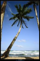 Coconut in Guacuco by quezado