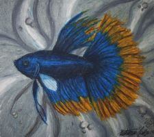 Oil Pastel Betta by staledemon