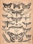 Butterfly and Moth Clipart by HauntingVisionsStock