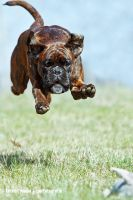 Jumping... by kolabox