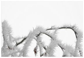 Furry Spikes by passacaglia