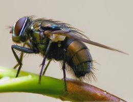 June Fly 002 by otas32