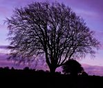 Day Forty Two: Sunsets + Trees by Kaz-D