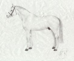 White Stallion by truly-devoted