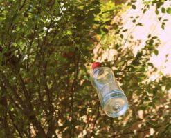 water bottle . by iDeathNee