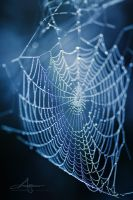 Wet Web by Stridsberg