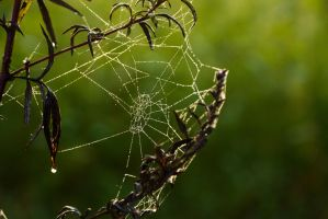 Spiderweb with Dewdrops 01 by LuDa-Stock