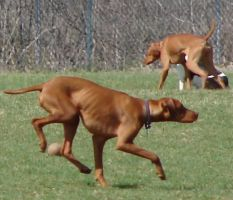 Playful Dog Park Action 04 by FantasyStock