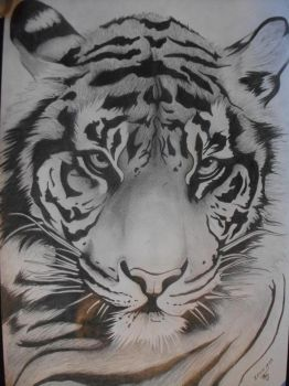 Tiger Finished by Lechadias