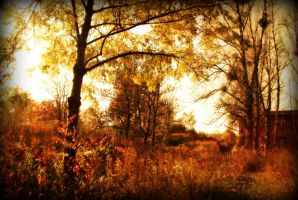 autumnal warmness by Mortsnort