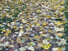 path of leaves by zowey