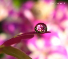 learning to see the beauty by sinanTR