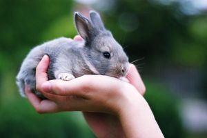 baby bunny by thnkfrthmmrs