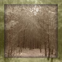 Old forest trail by Tap-Photo-and-Co