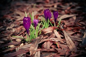 First flowers by photographybyteri