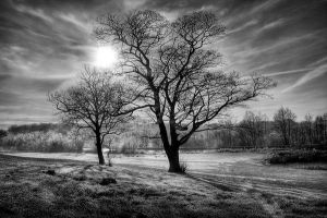 Winterscape Monochrome by pjones747