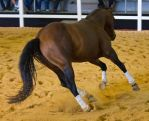 STOCK - 2014 Total Equine Expo-118 by fillyrox